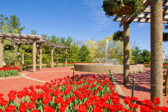 red_tulips_fountain