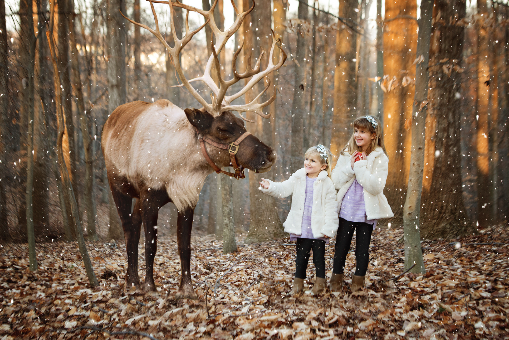 Santa's Reindeer Training School photo